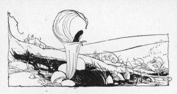 small flower and mushroom illustration