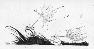 frogs and fairyes race illustration